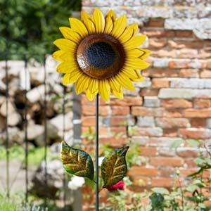 Smart Garden Sparkling Sunflower Bloom 5030083